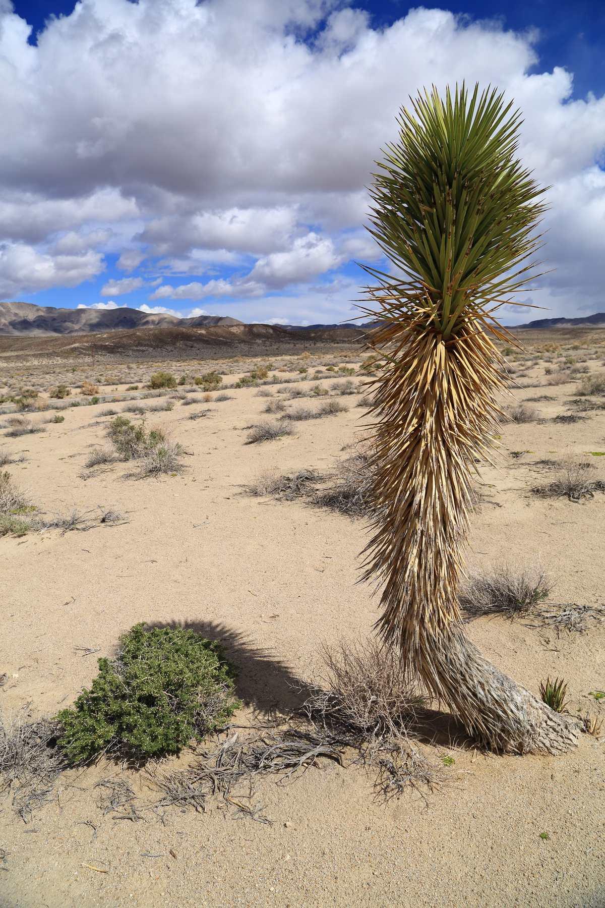 Desert plant on the way