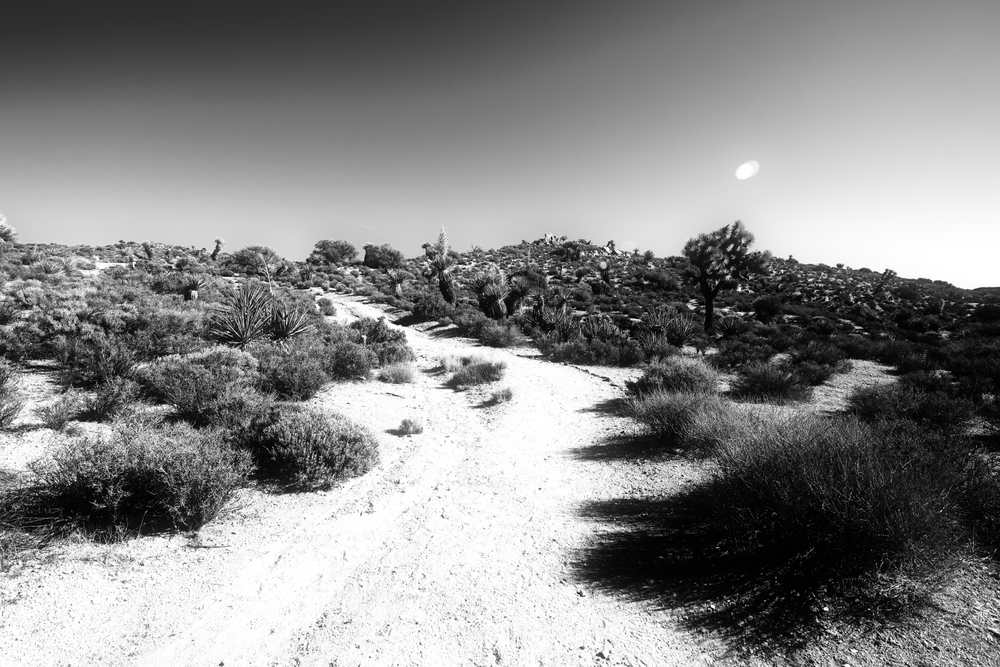Joshua Tree National Park up the hill