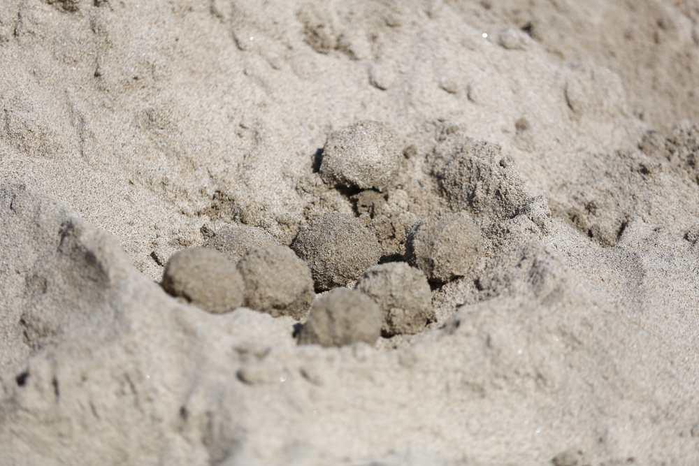 Balls of sand