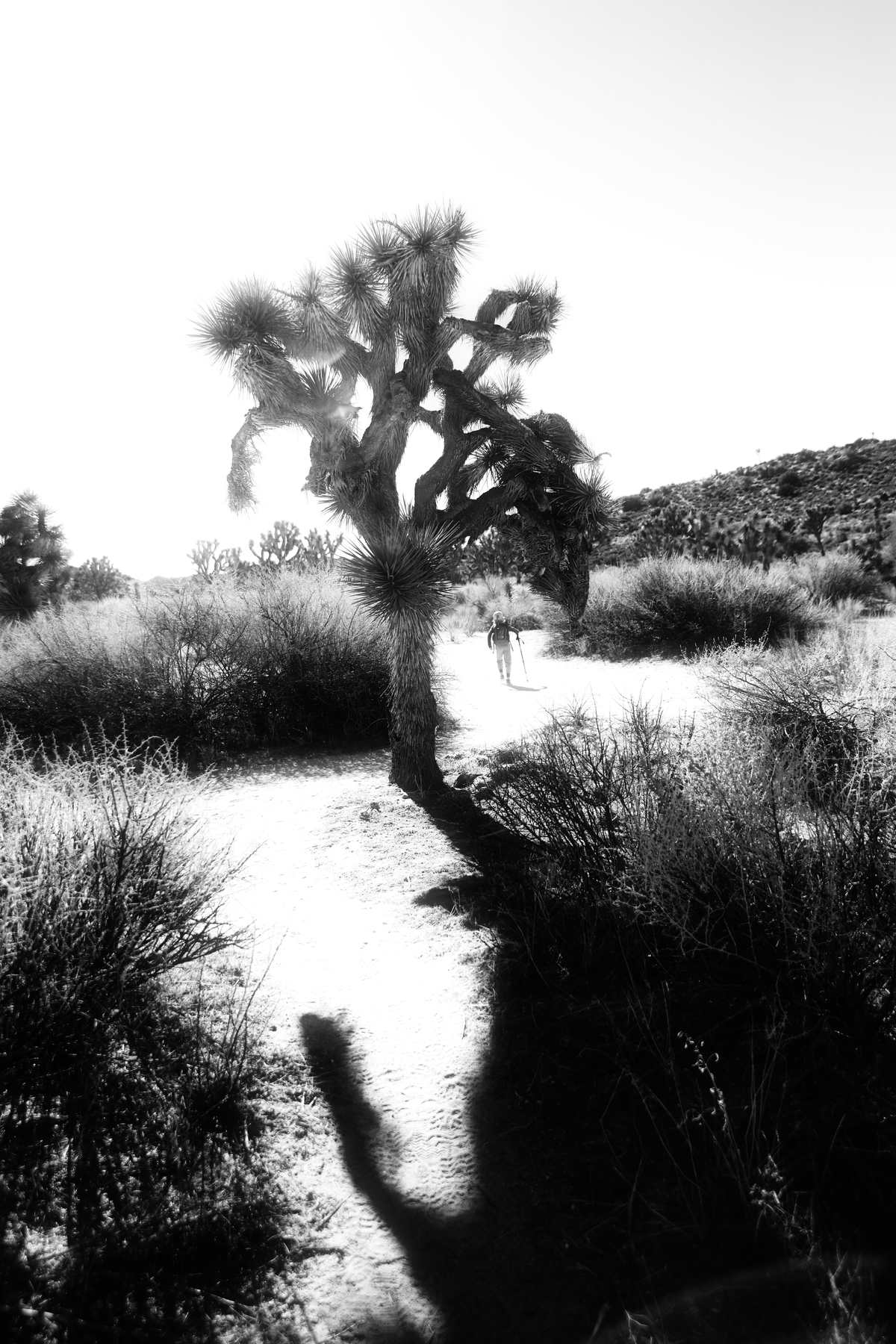 Joshua Tree National Park in the light
