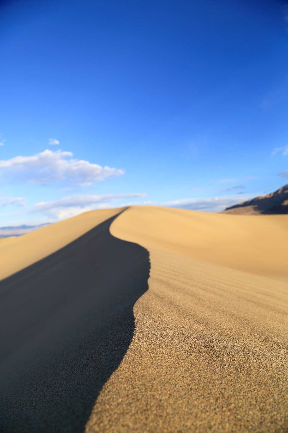 Looking across a ridge of a sand dune