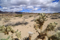 Death Valley April 2014 022.jpg