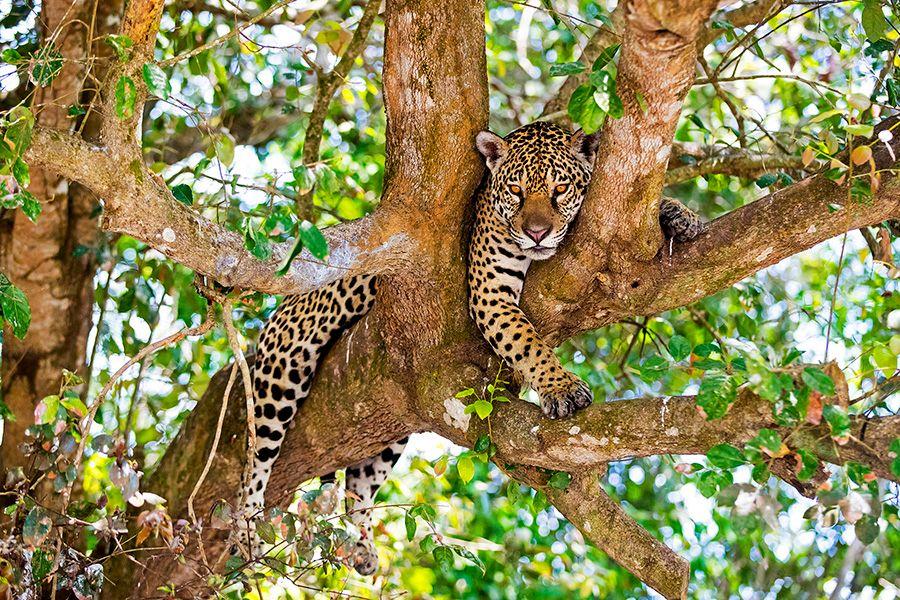 jaguars24.JPG