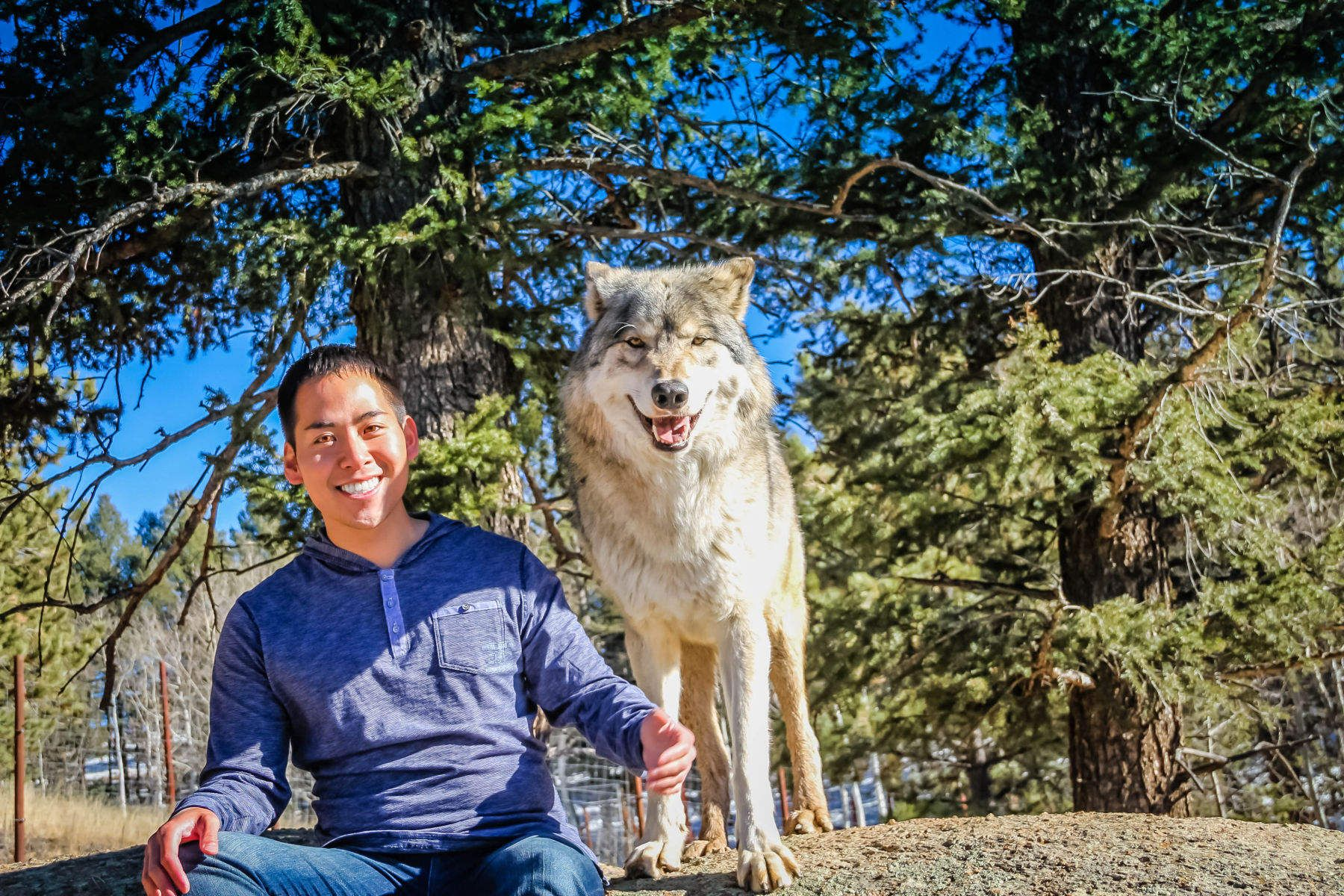 Colorado Wolf and Wildlife Center - Divide, Colorado