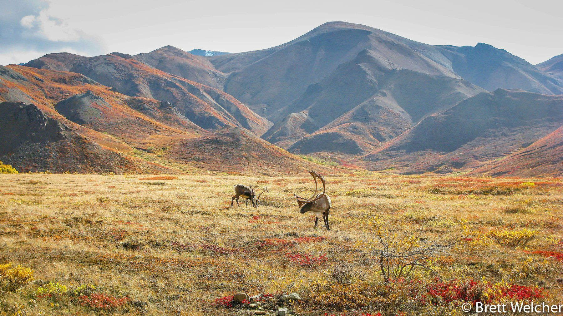 Denali National Park and Preserve - Denali Park, Alaska