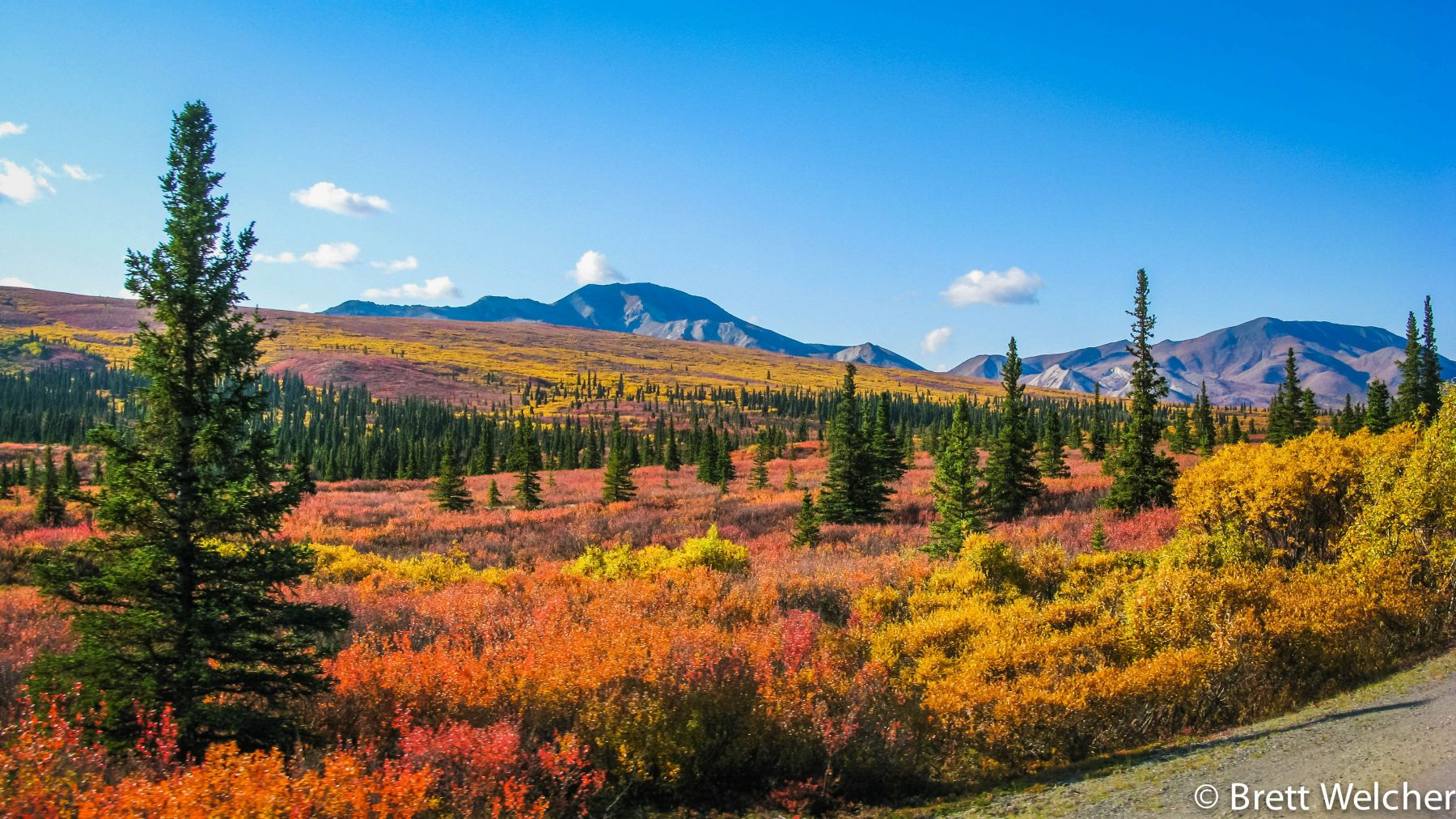 Denali State Park erupts in bright shades of red, orange and yellow during the fall.