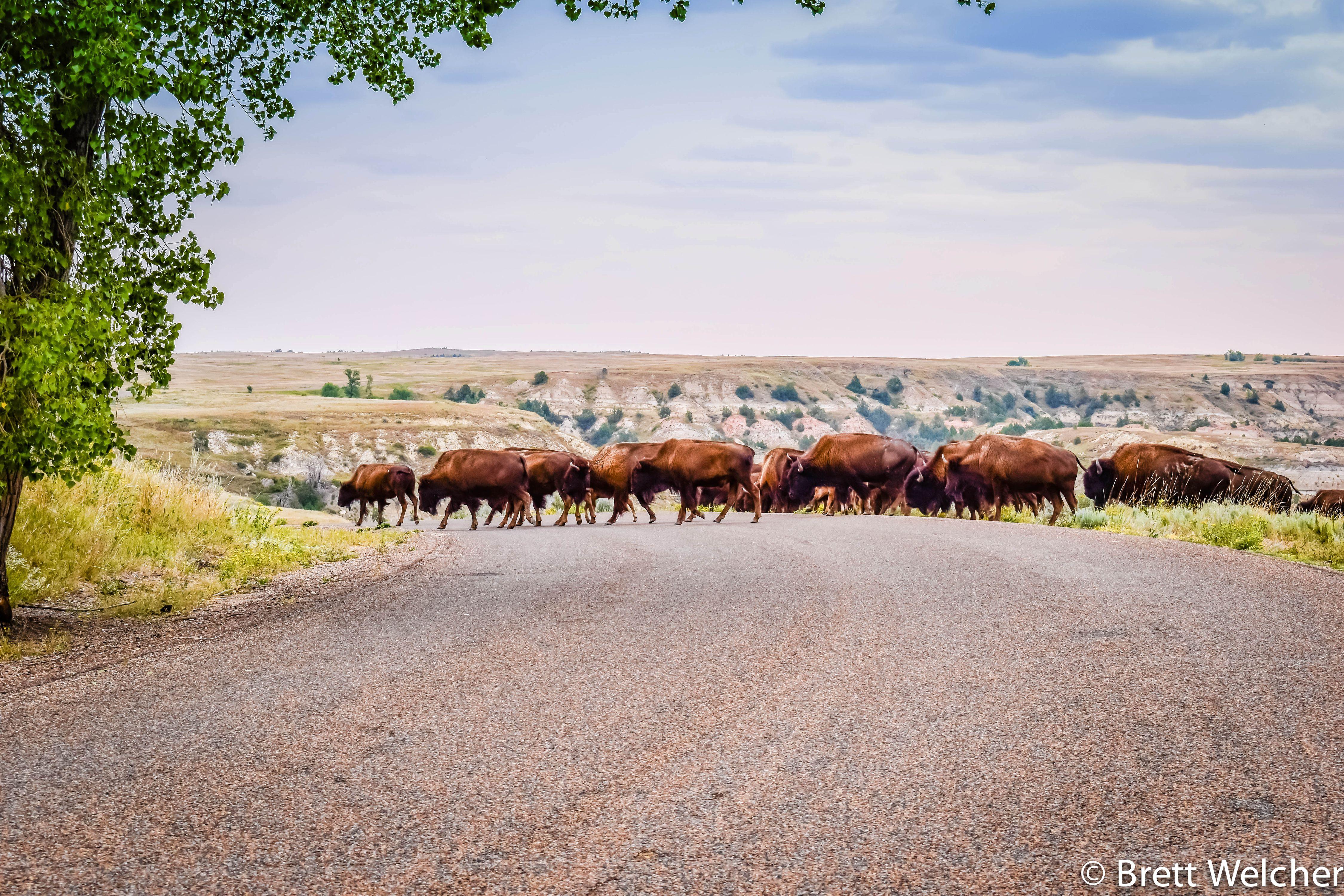 Theodore Roosevelt National Park - Medora, North Dakota