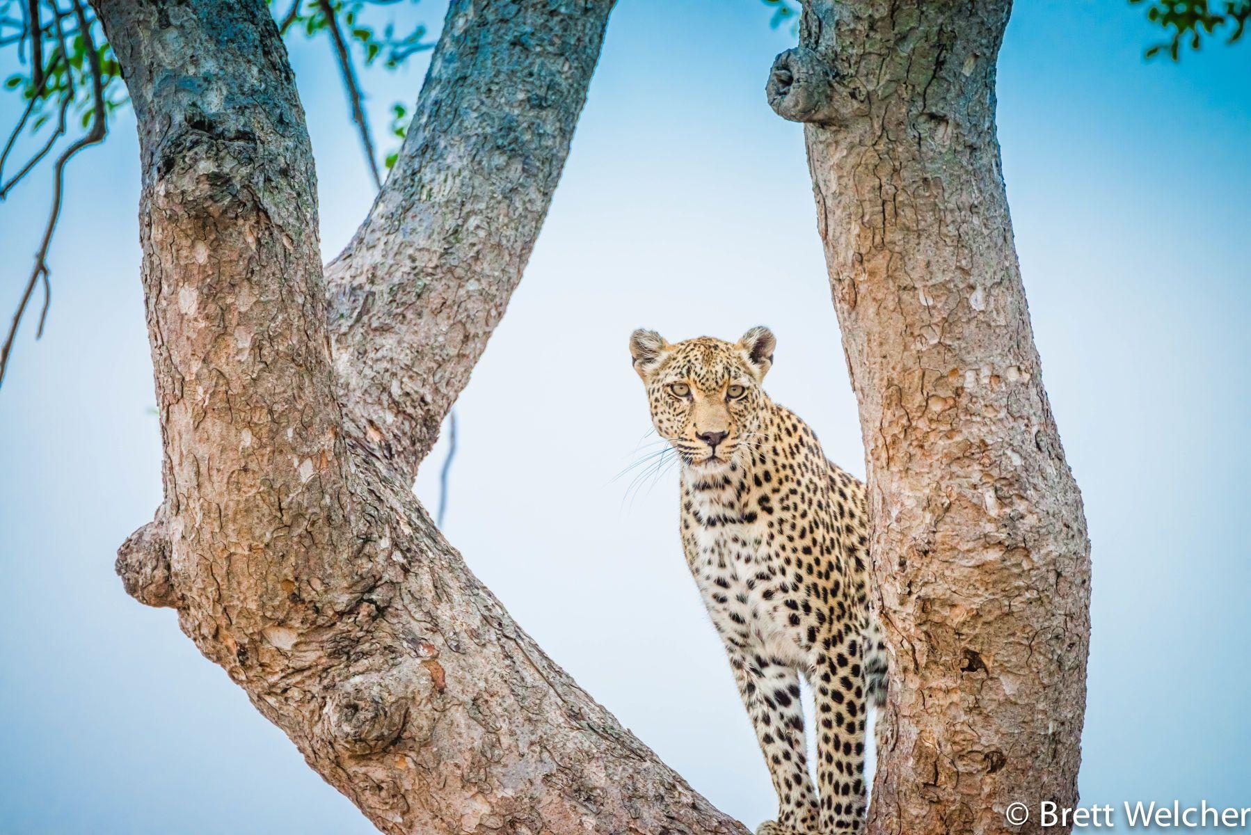 Timbavati  Game Reserve - Kruger National Park
