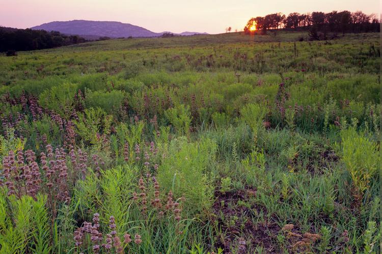 Wichita Mountains Wildlife Refuge Wildflowers