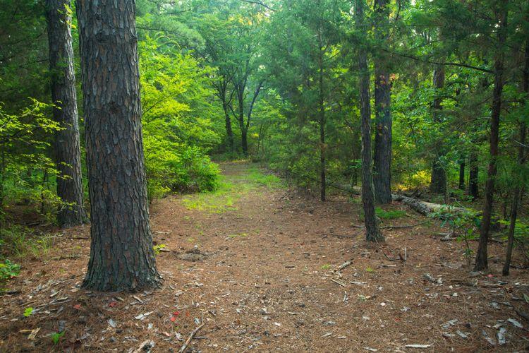 Ft Cobb State Park Trail