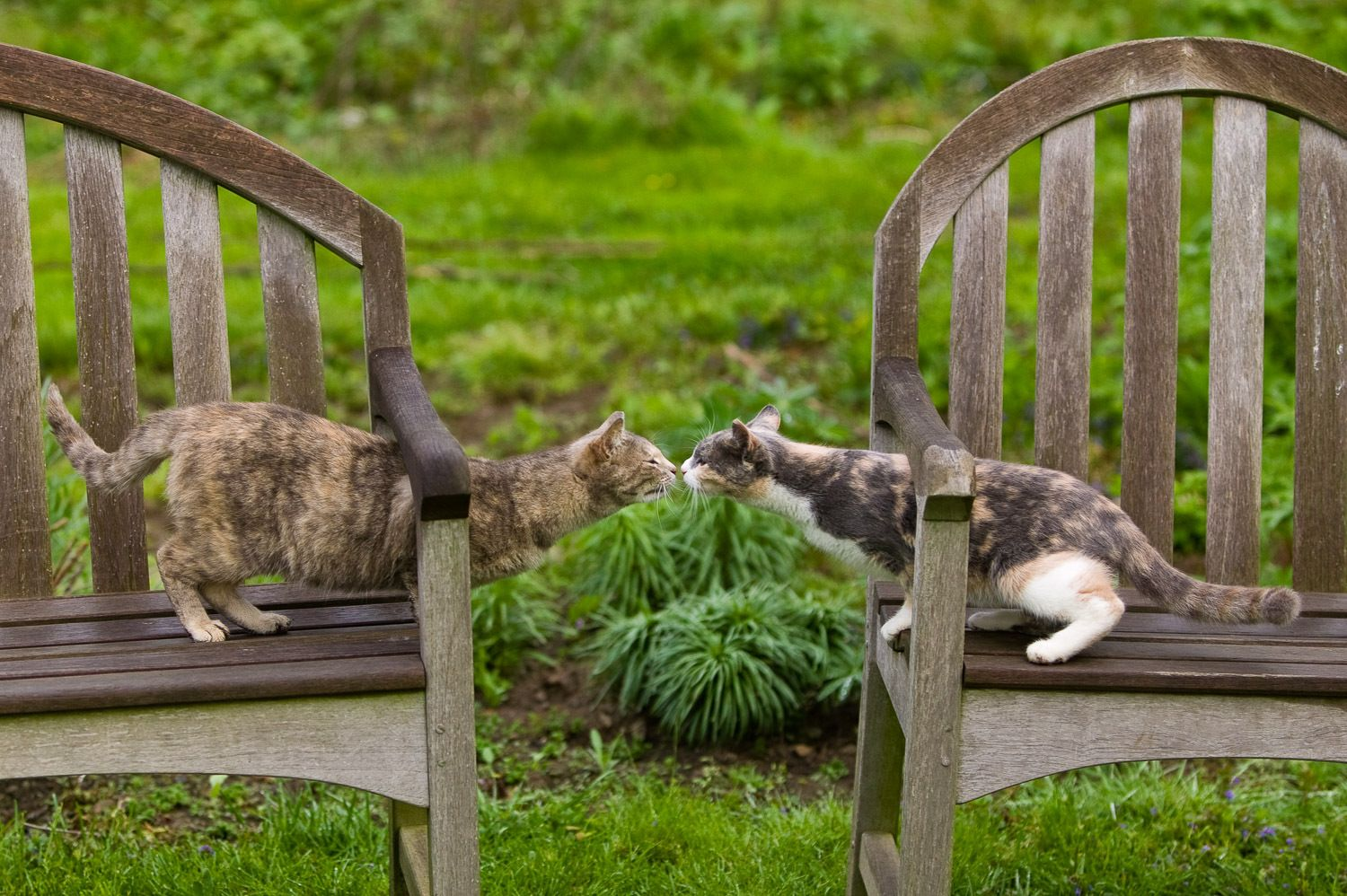 Kitties in the garden in Middletown, RI