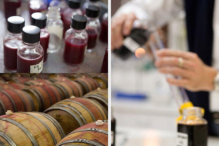 wine vineyards wineries