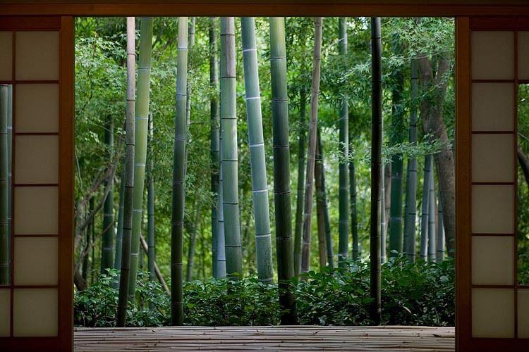 japan tradition bamboo