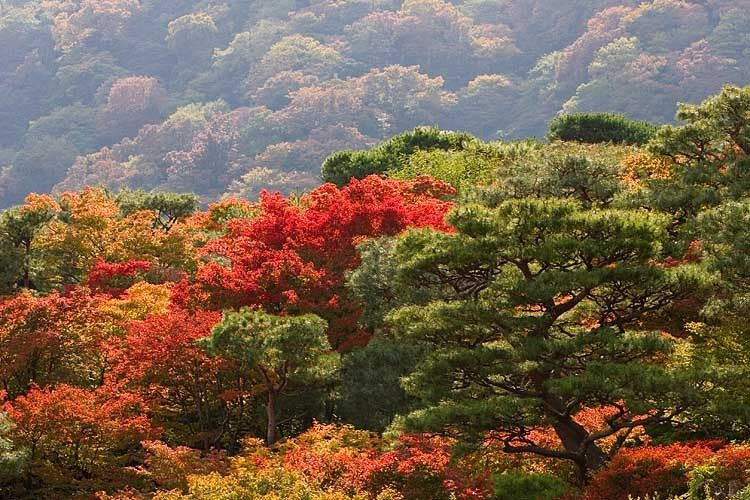 japan nature tradition