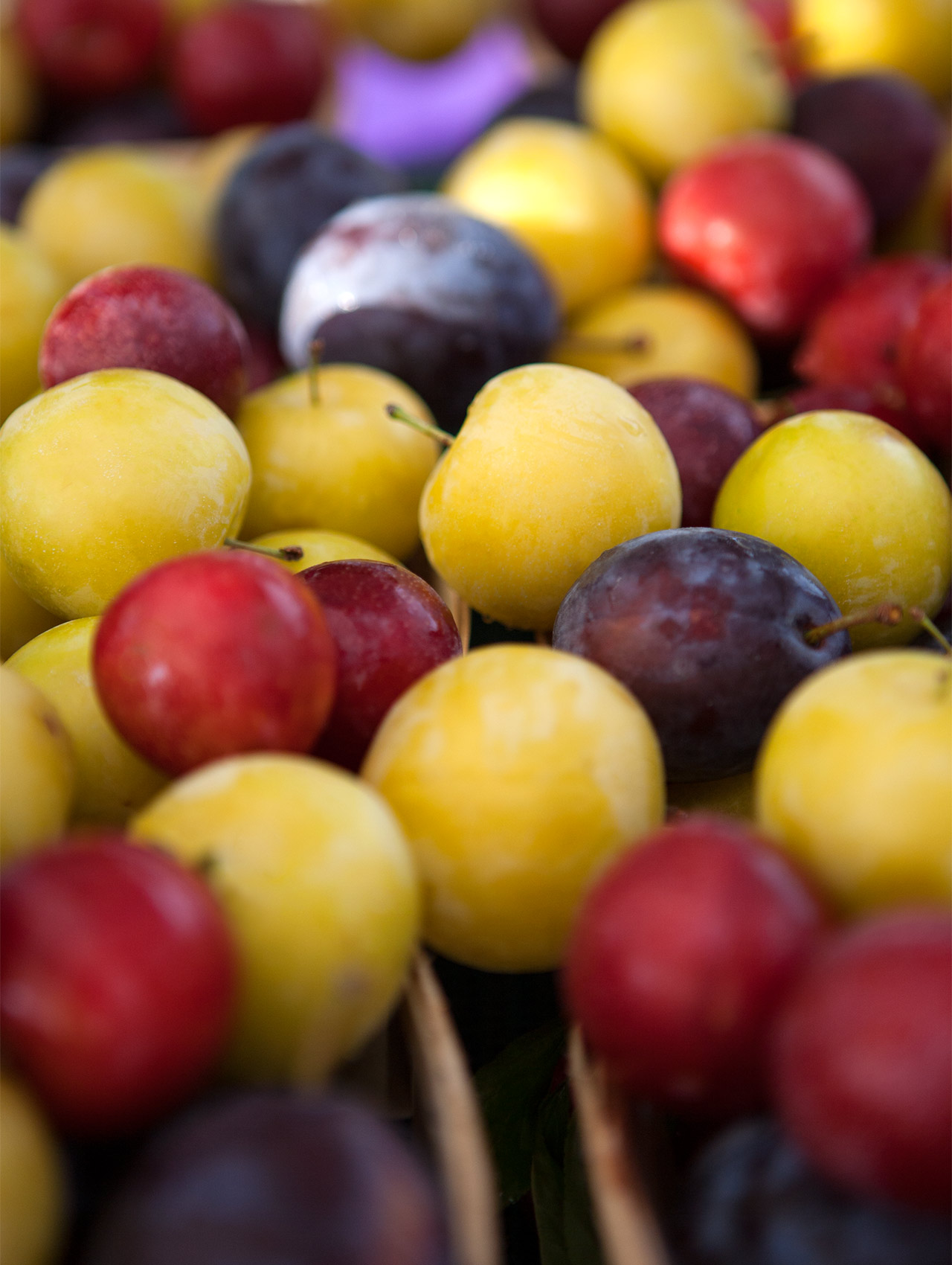 Plums Green City Farmers Market