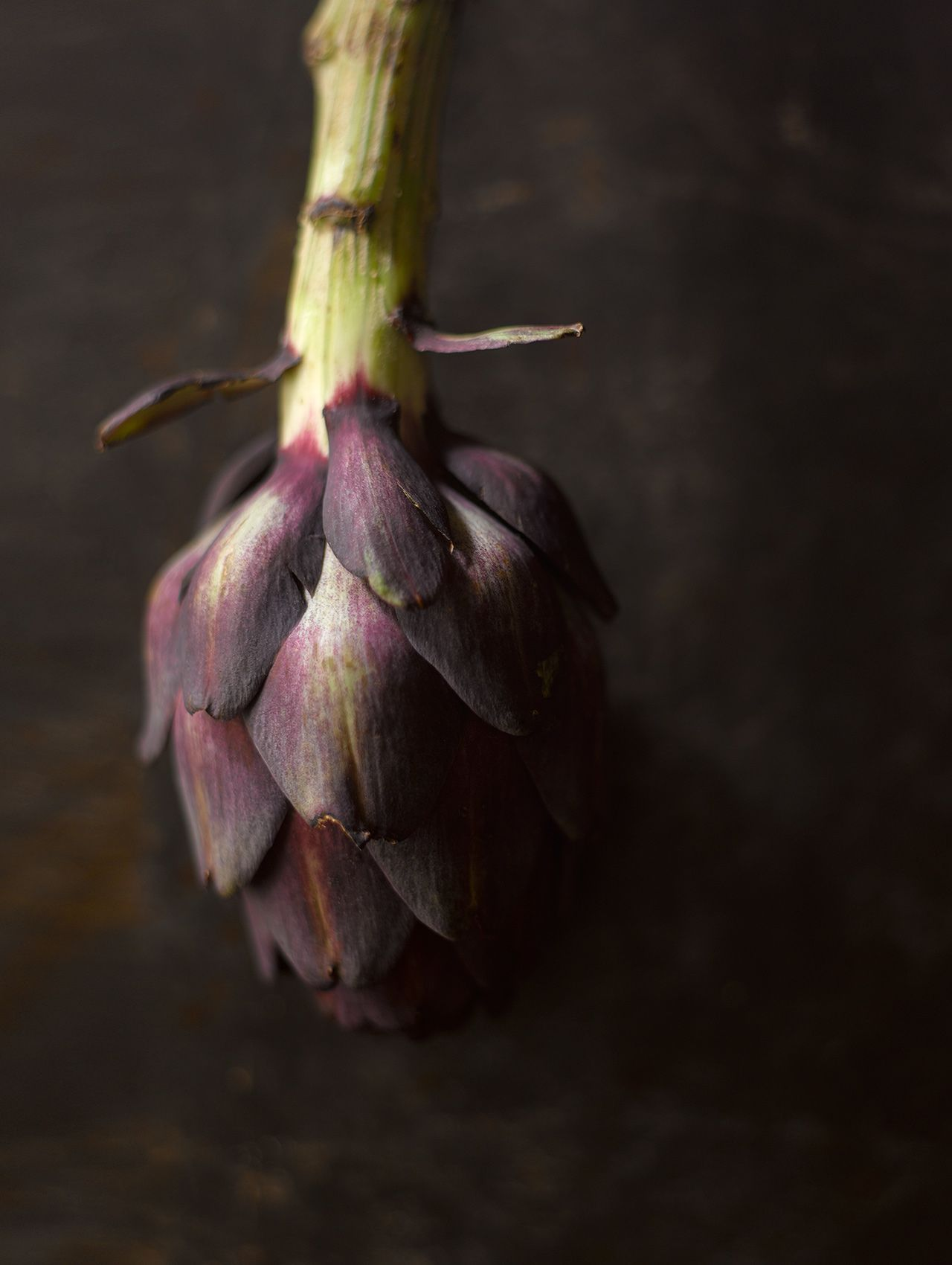 Purple Artichoke Still Life