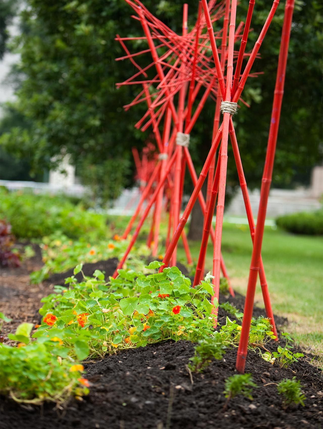 Plantings Growing Power Chicago