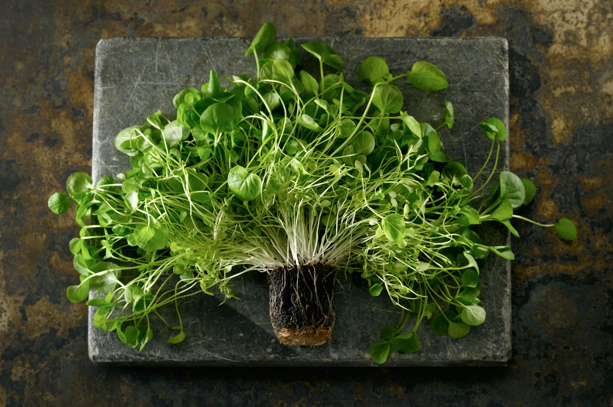 Upland Cress Herb Plant