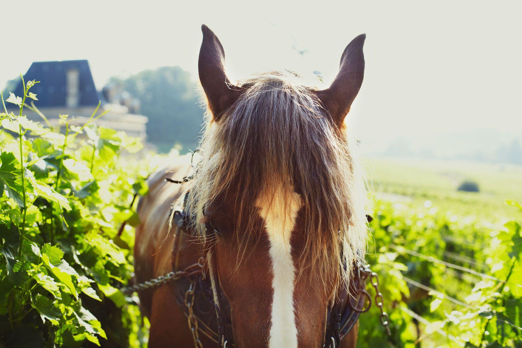 1plowman_france_wine3.jpg