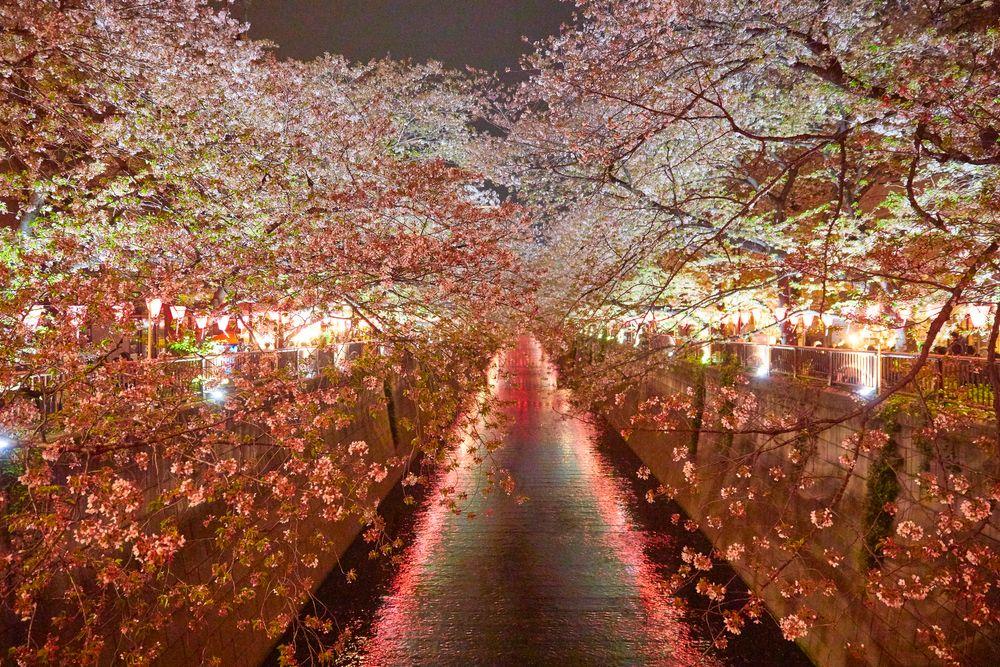 180401_NM_Japan_0126.JPG