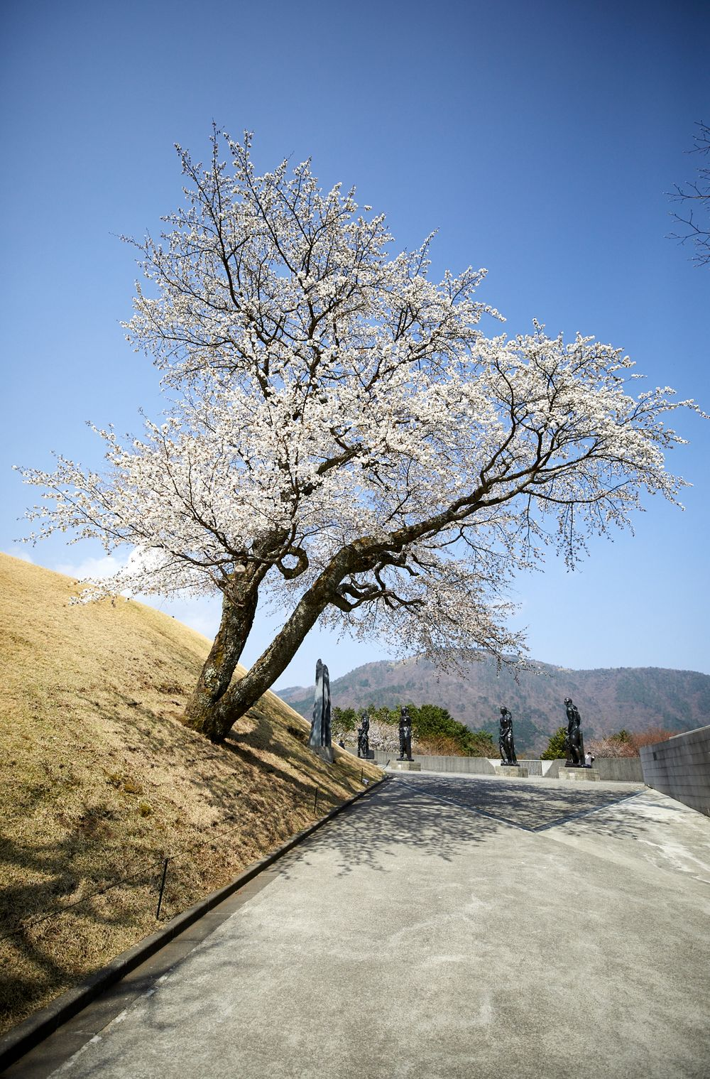 180401_NM_Japan_1381.jpg