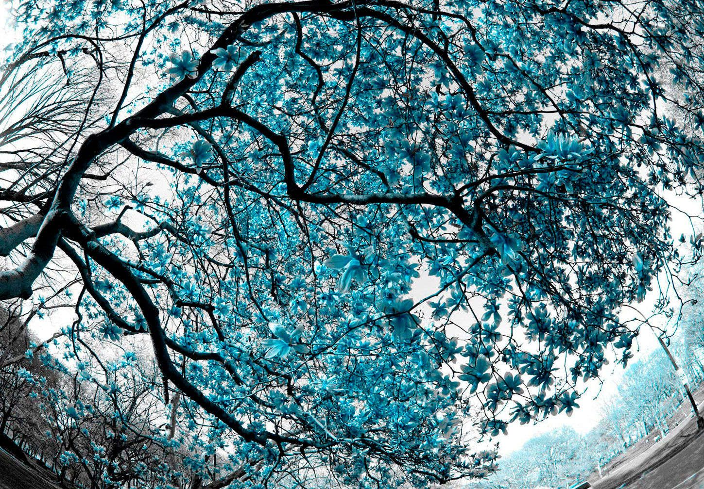 Magnolia Tree in Blue