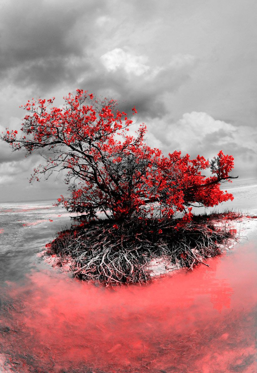 Vertical B&W Red Mangrove
