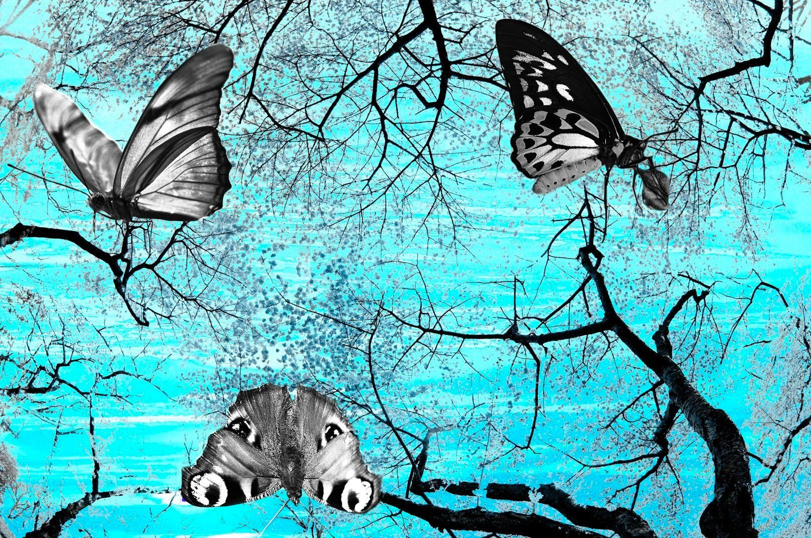 Turquoise Cherry Blossoms with B&W Butterflies