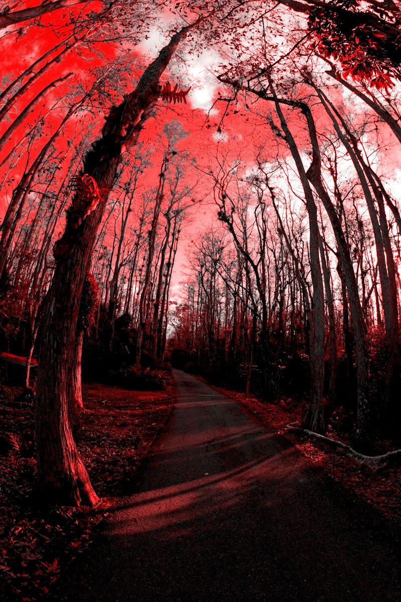 Road in the Forest in Red