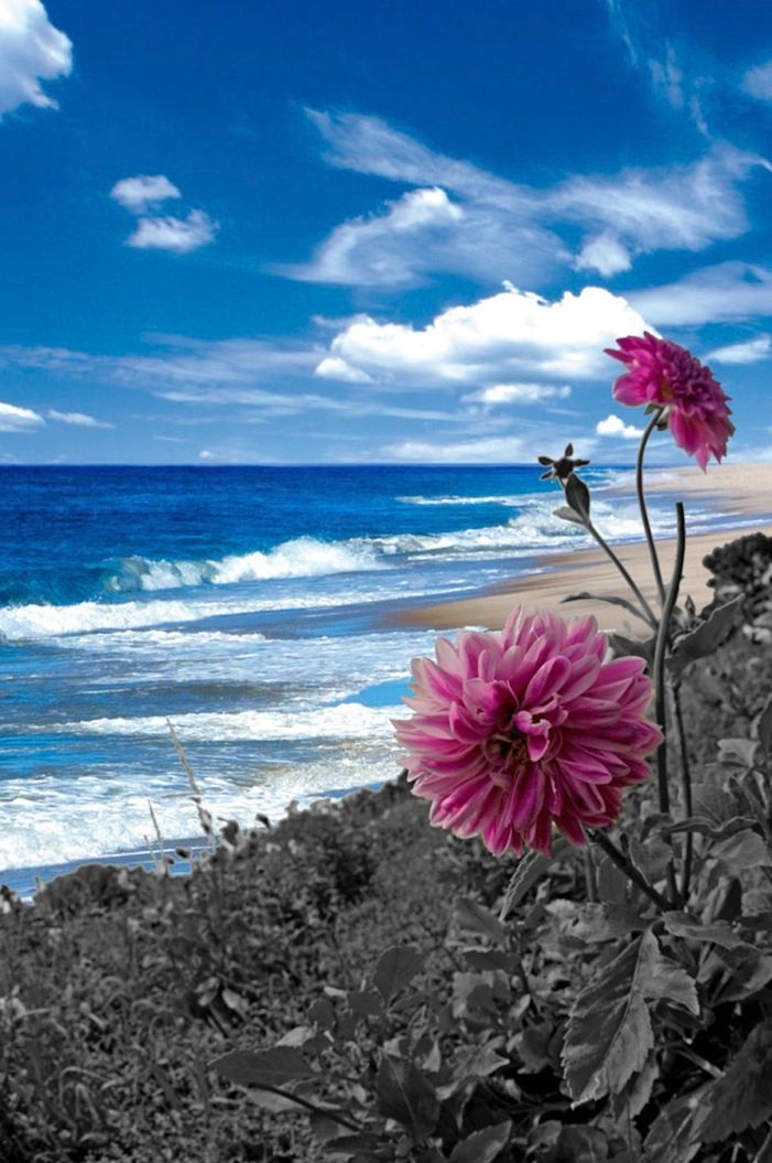Purple Flower on the Shore