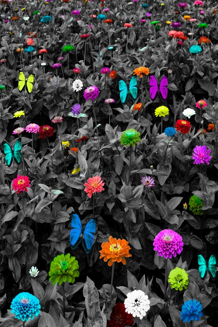 Vertical B&W Meadow with Colorful Flowers