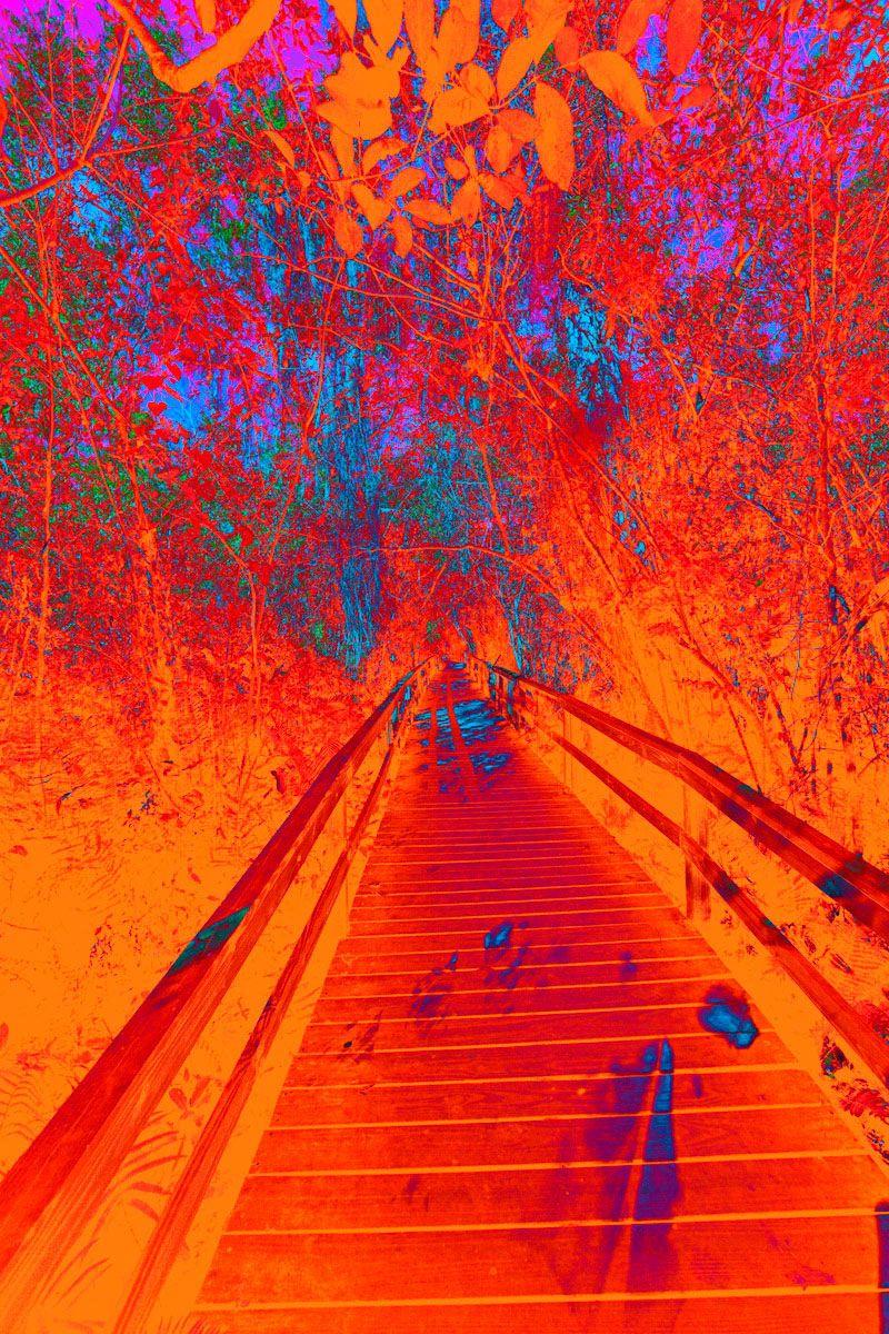 Pyschedelic Everglades Trail