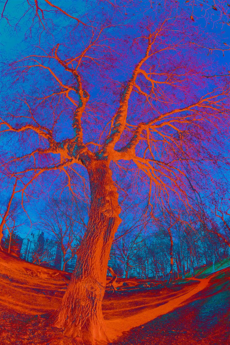 Red Abstract Tree_3903ab
