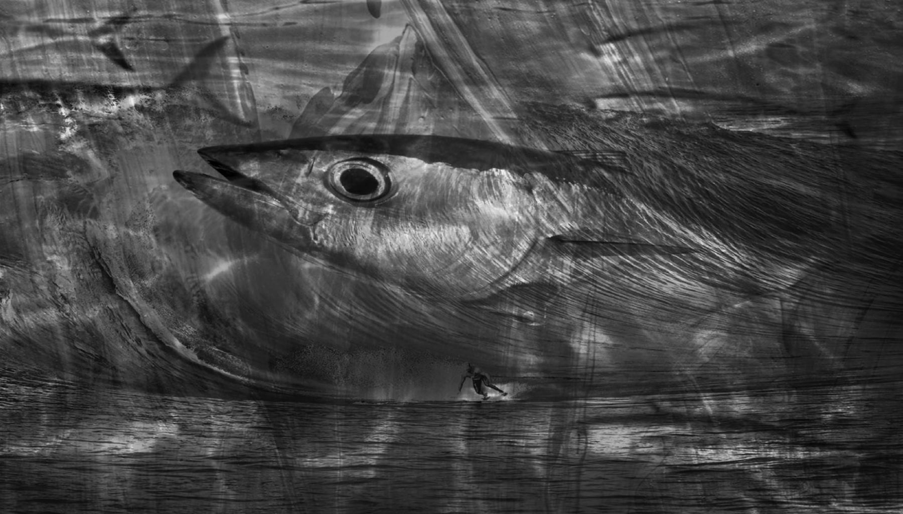 Abstract Fish with Surfer B&W