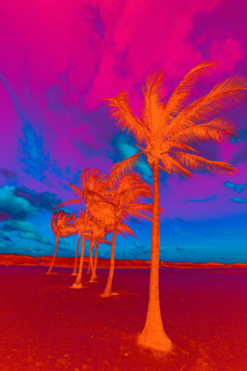 Vertical Psychedelic Palm Trees II