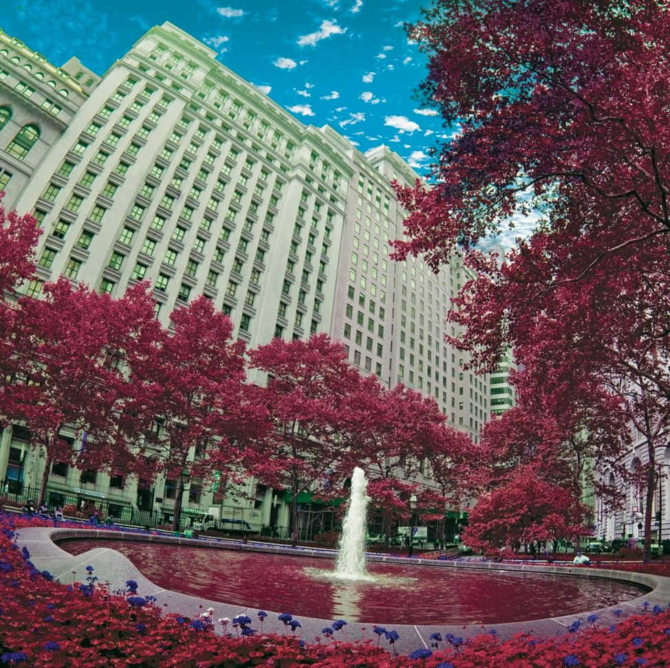 Fountain in Bloom