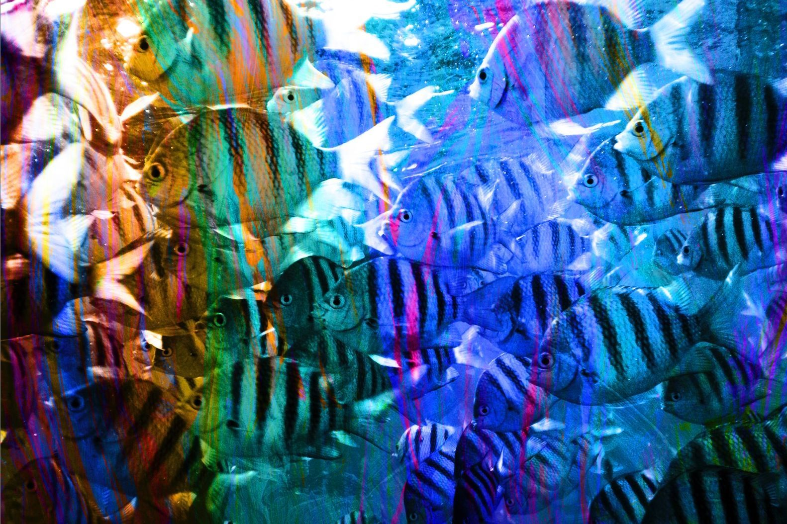 Striped Abstract with Fish in Purple