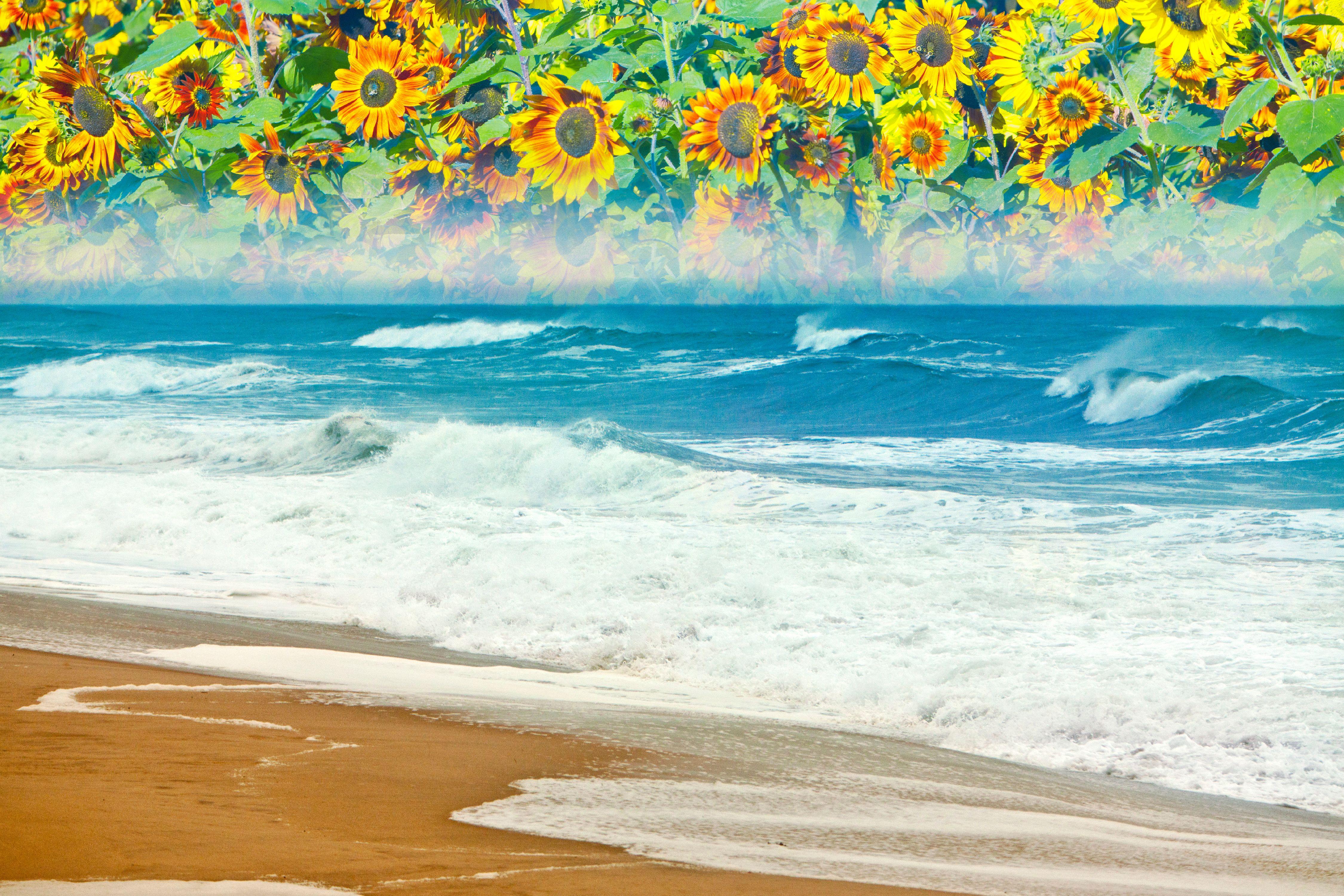 """Montauk Sunflower Shore 35""""x60"""""""
