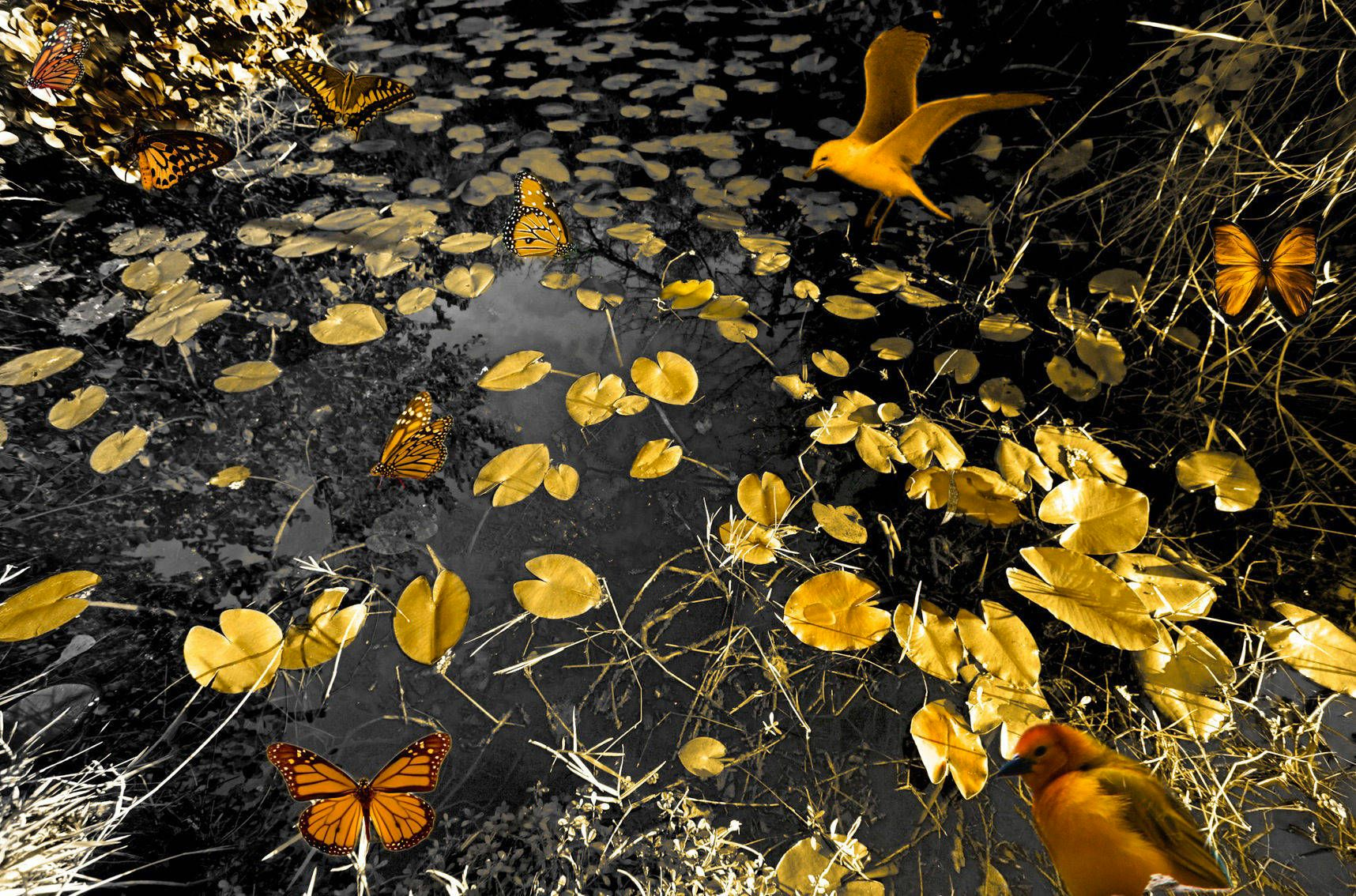 Golden Marsh with Butterflies