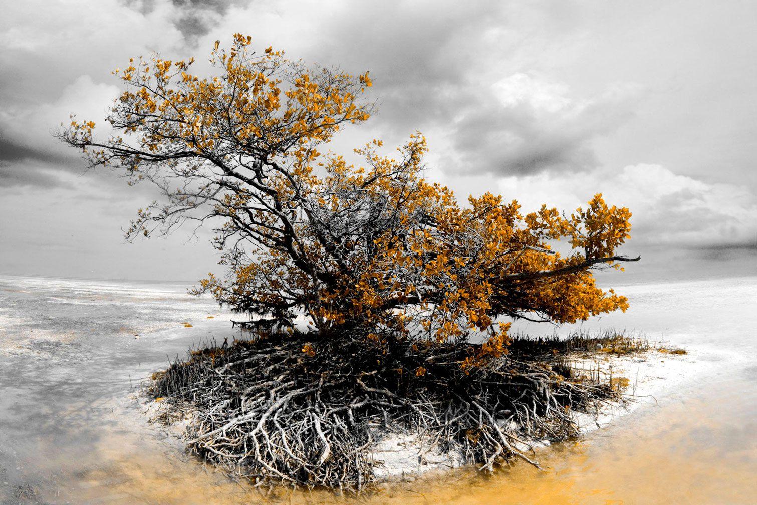 """B&W Golden Mangrove 43""""x65"""""""