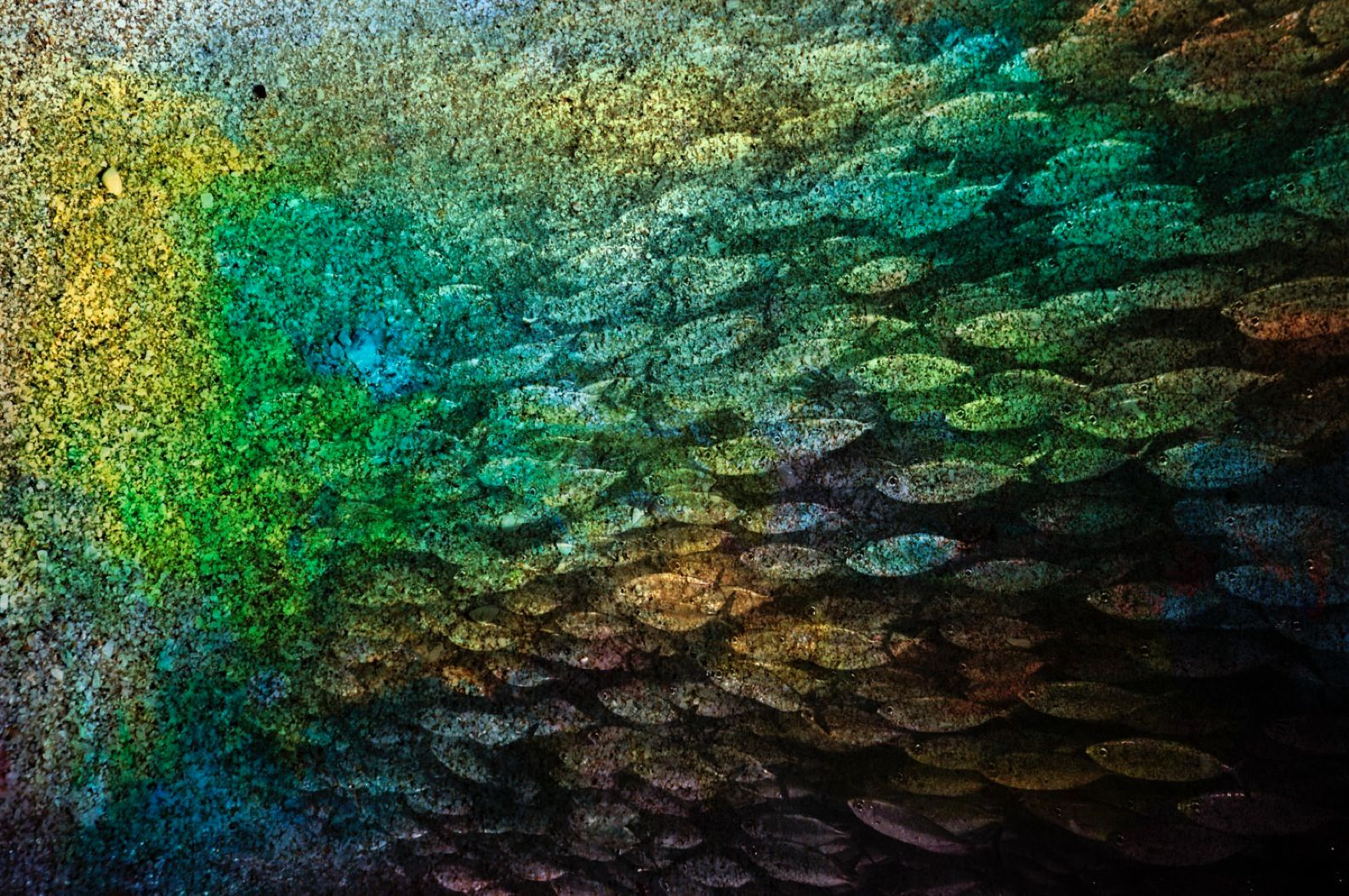 """Seashell Fish Underwater 40"""" x 60"""""""