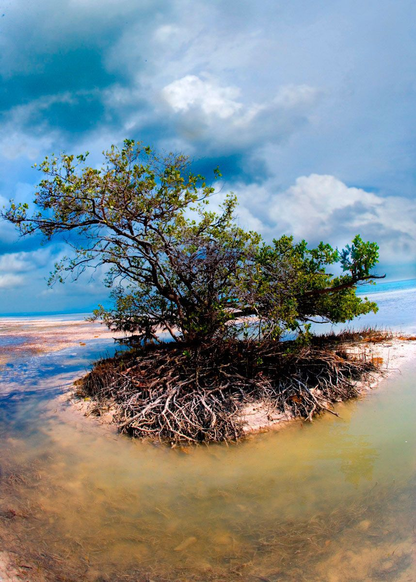 Vertical Natural Mangrove