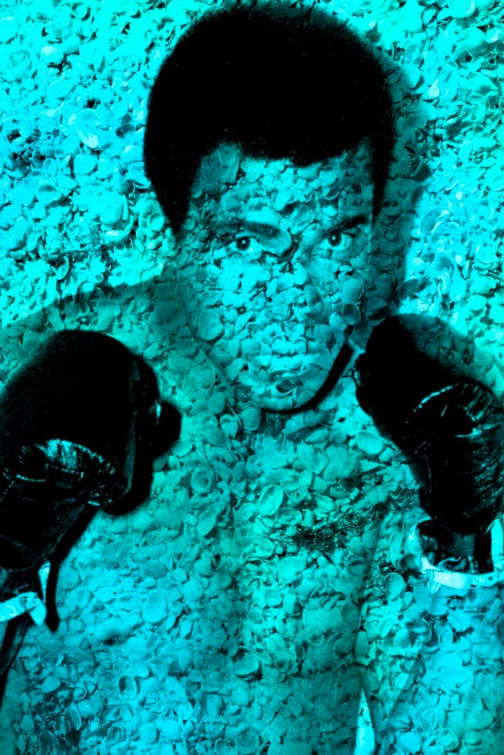 "Ali Portrait of Shells In Turquoise 60"" x 40"""
