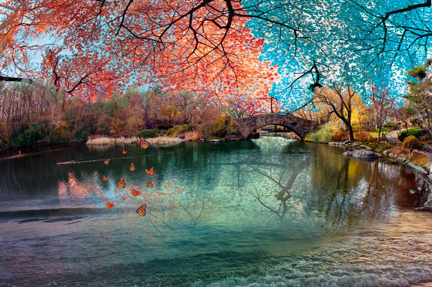 Central Park Rainbow Bridge with Butterflies