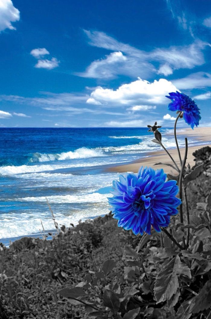 Blue Flower on the Shore