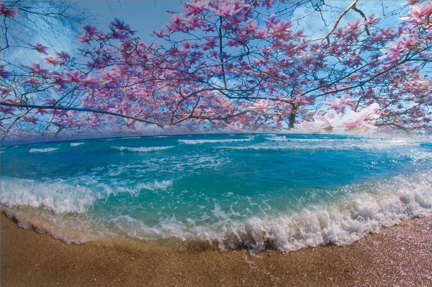 Caribbean in Bloom
