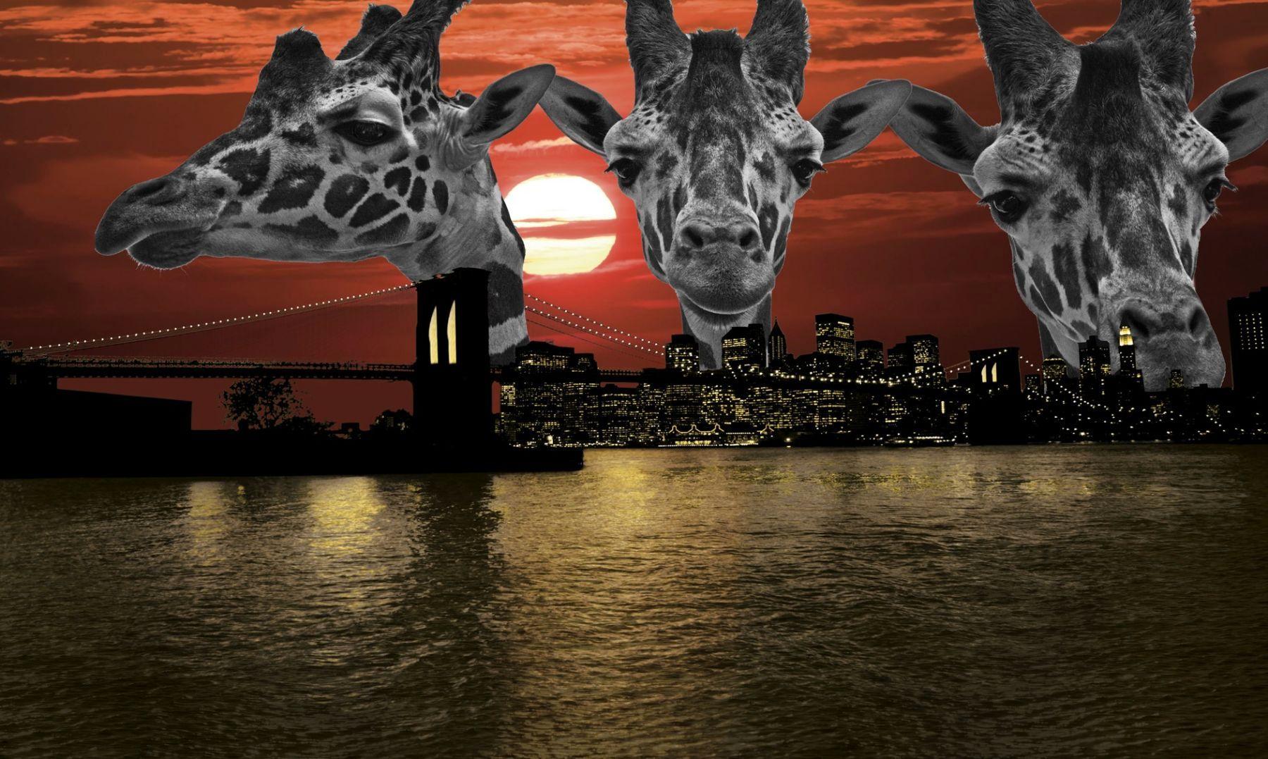 Giraffe Skyline