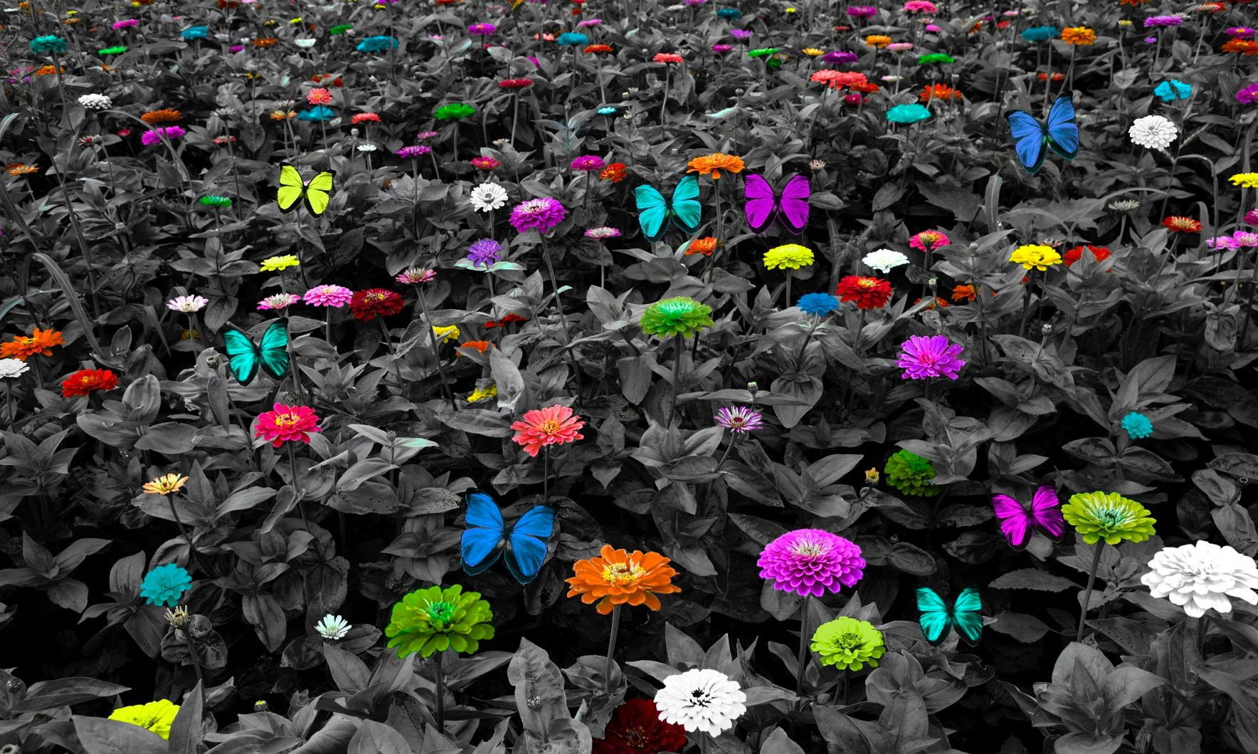 BW Colorful Butterfly Meadow