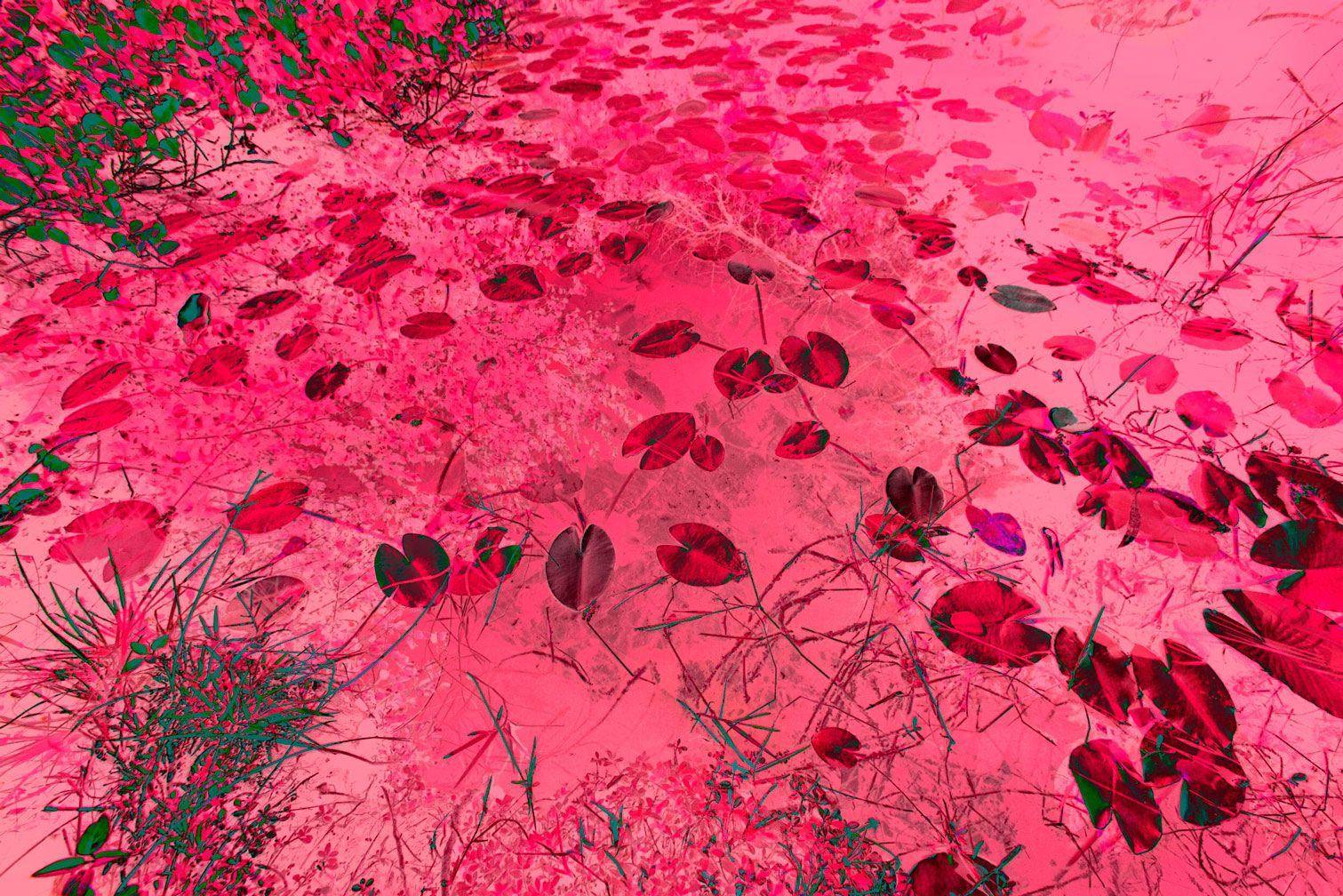 "Horizontal Candy Pink Everglades Marsh 48""x80"""