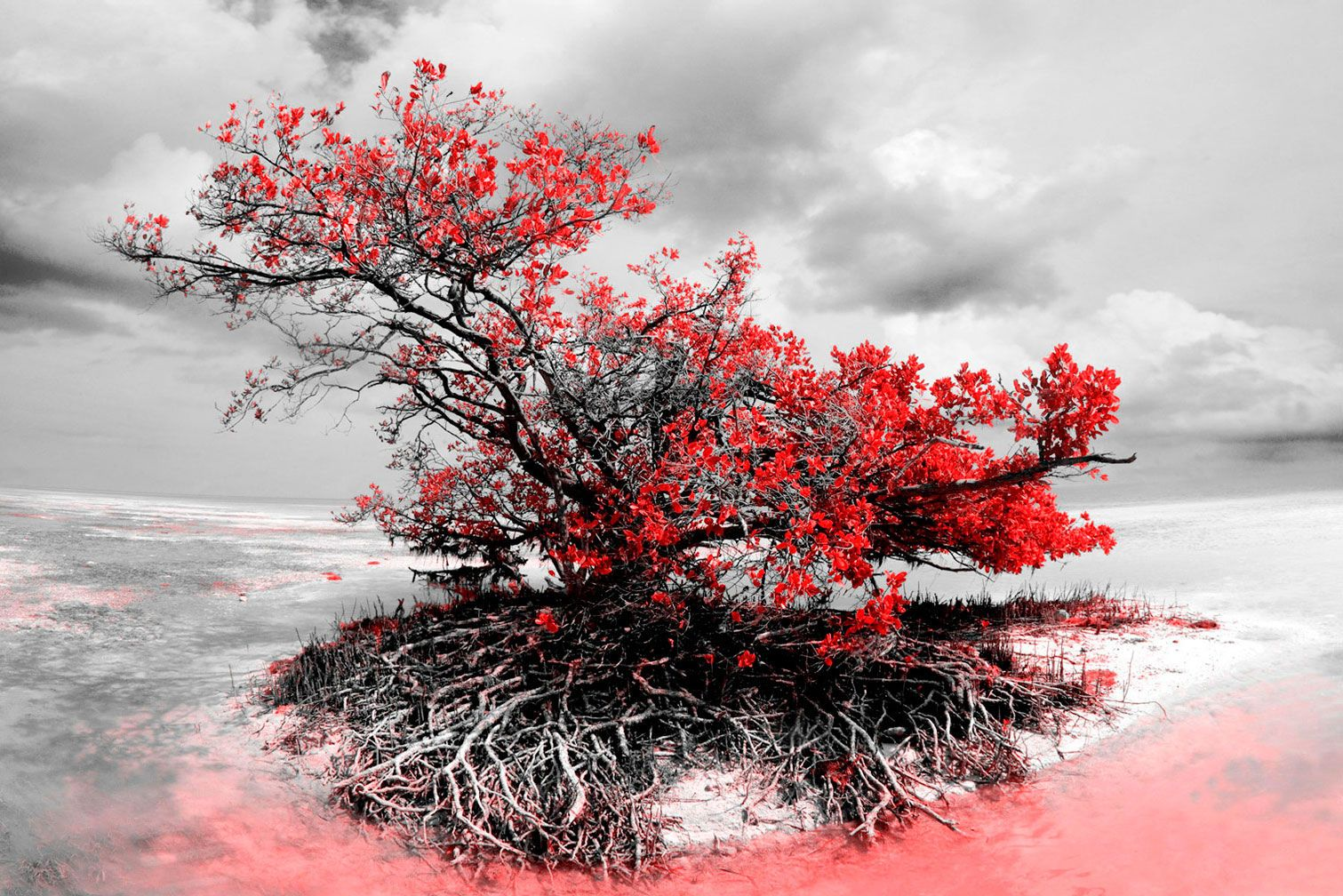 "B&W Red Mangrove 43""x65"""